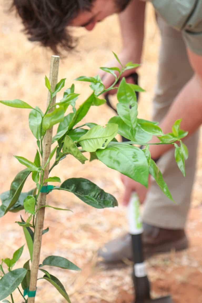 AfriForum se Kaapstad-Noord-tak plant bome in Ysterhoutparkie
