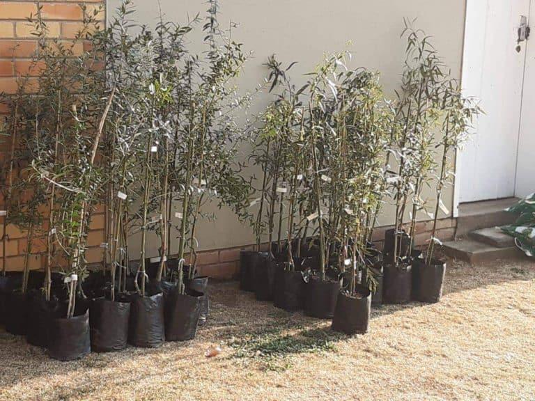 Boomplantmaand: AfriForum se Bethlehem-tak dra by tot 'n groener toekoms