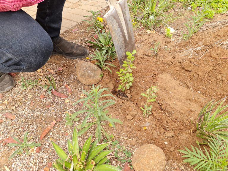AfriForum se Pietersburg-tak plant bome vir boomplantmaand