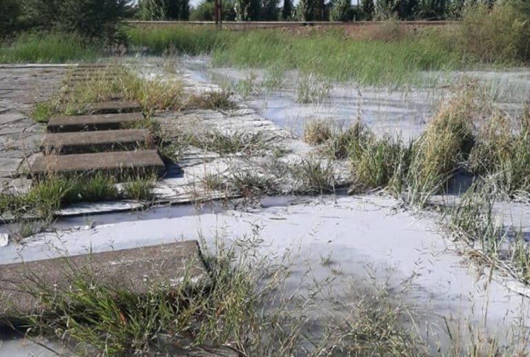 AfriForum plaas Moqhaka-munisipaliteit op terme ná riool in begraafplaas