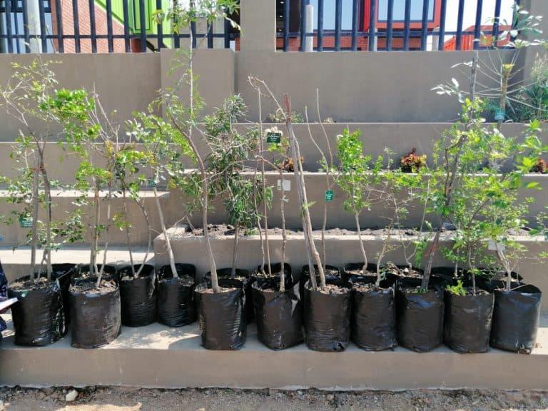AfriForum se Witbank-tak vier boomplantmaand