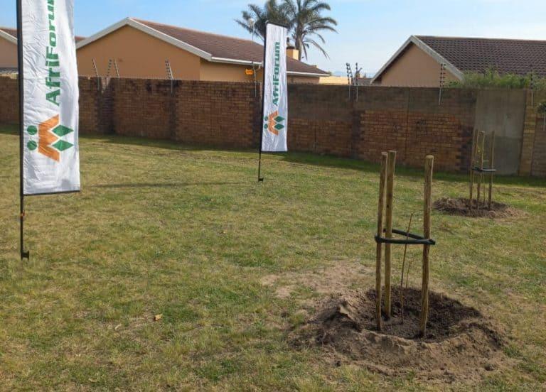 AfriForum se Mosselbaai-tak verfraai parkie deur bome te plant